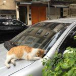 赤峰街、雨の夜に猫わらわら