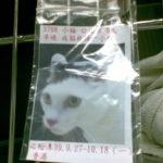 台湾大学付属動物病院で隔離された日々|猫の検疫