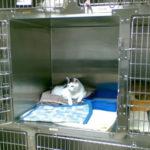 香港から台湾へ、動物検疫のまとめ|猫の検疫