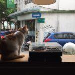 MRT圓山駅近くの「啡創工廠 Future Factory」中山球場前。つれない美猫を眺めながら