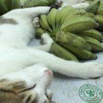 ねこはバイクやバナナで眠る