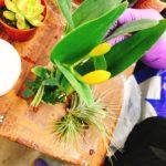 内湖の台北花市でエアプランツをカスタムメイド